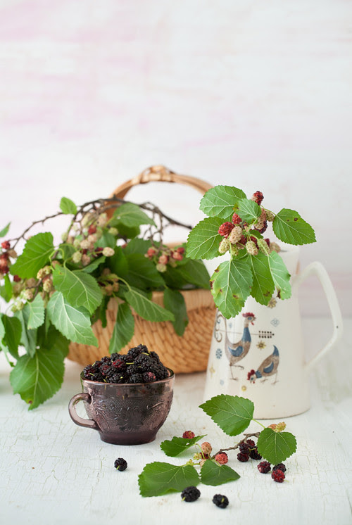 Mulberries 3