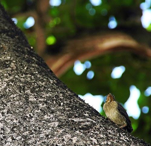 Little Bird in a Big Tree