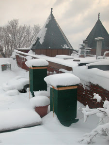 roof beehives in the snow