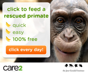 Feed Rescued Primates