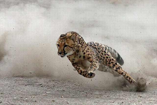 Fotos Do Mundo Selvagem