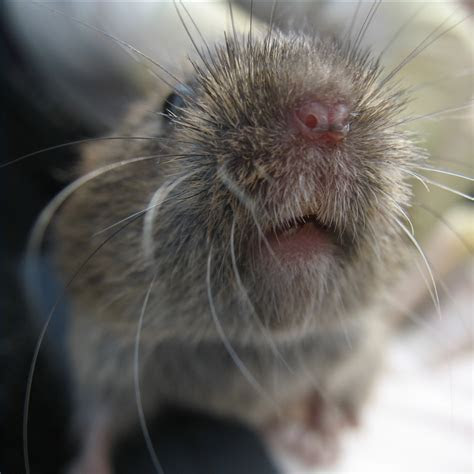 What Plants Will Voles Not Eat?   eHow