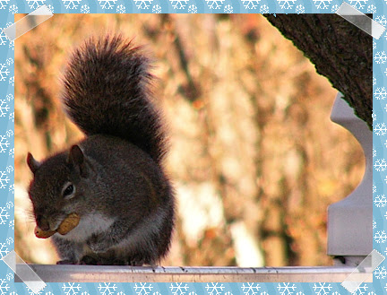 Squirrel... hit by bullet?
