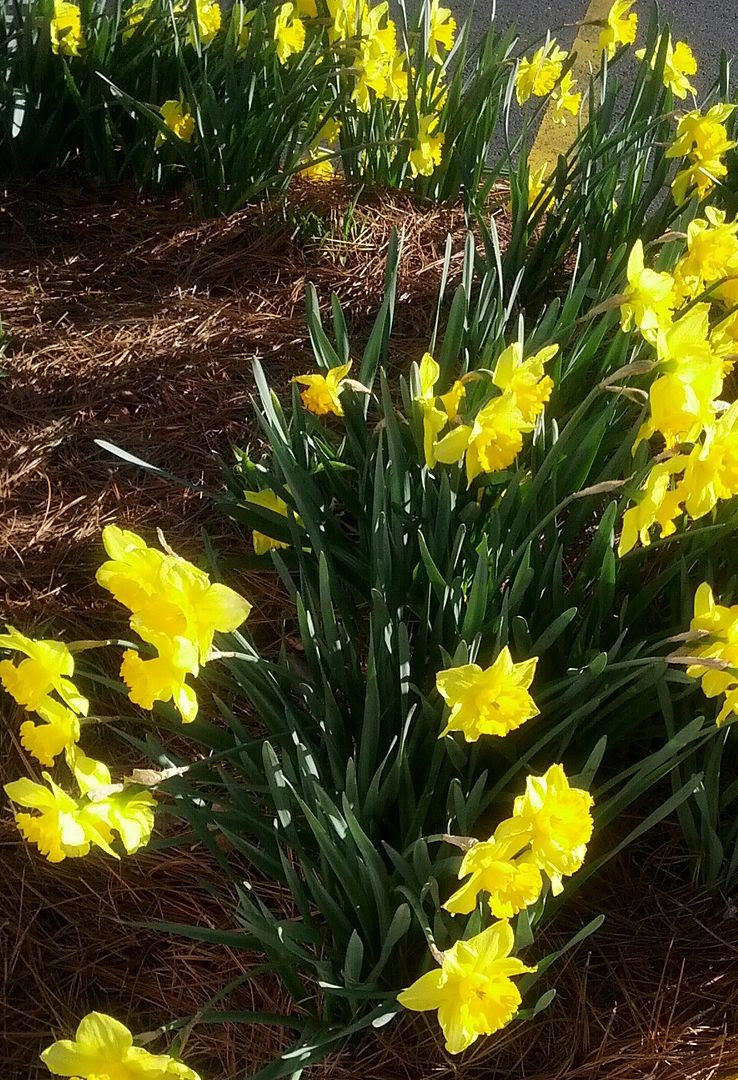 photo Spring22_zps9996c222.jpg