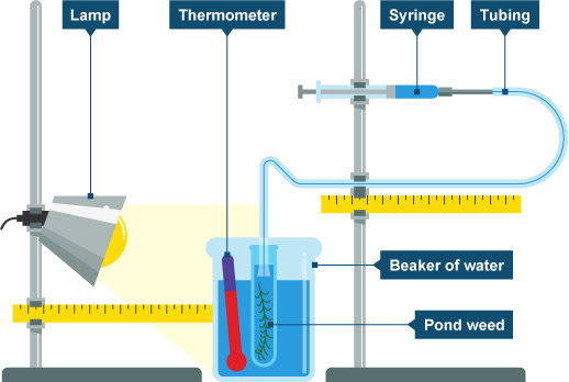 Diagram of photosynthesis experiment equipment