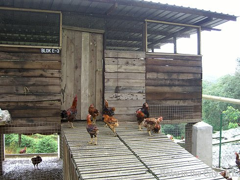 Chickens have luxurious life here, the coops even have block numbers