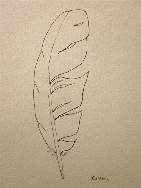 sea bird feather original ink drawing  drawings