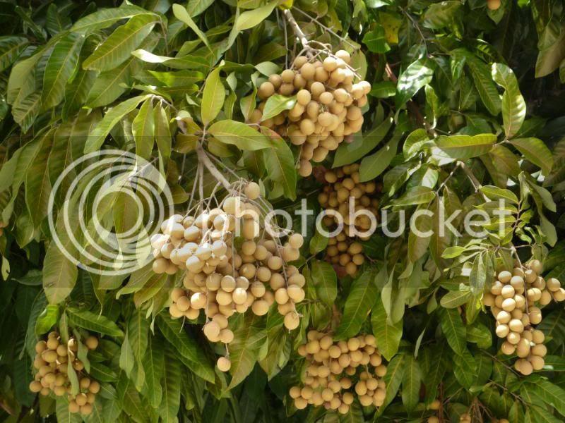Kristy's Corner: Tropical Fruits in Homestead, FL