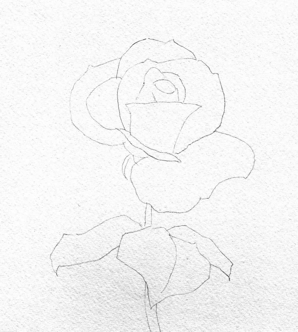 Hoontoidly Simple Pink Rose Drawing Images