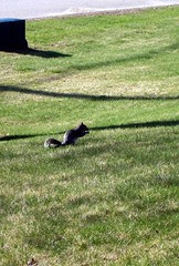 Squirrel_41410b