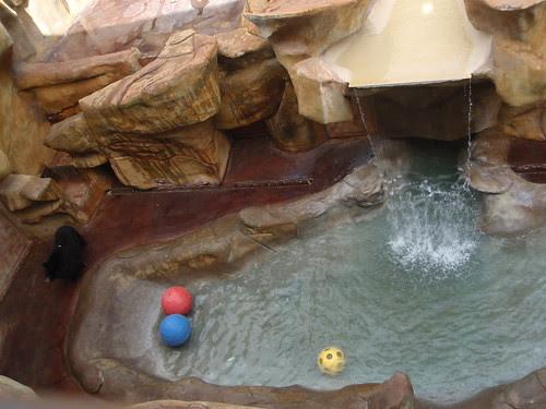 bear habitat (3)