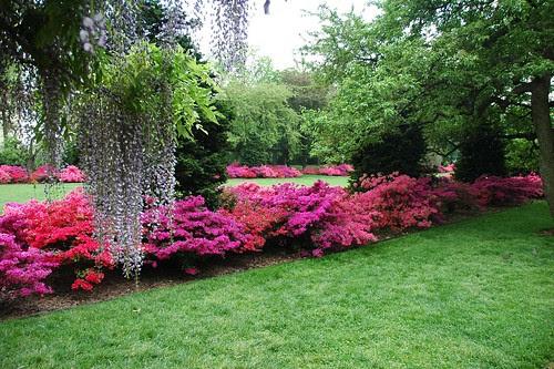 Osborne Garden, Brooklyn Botanic Garden