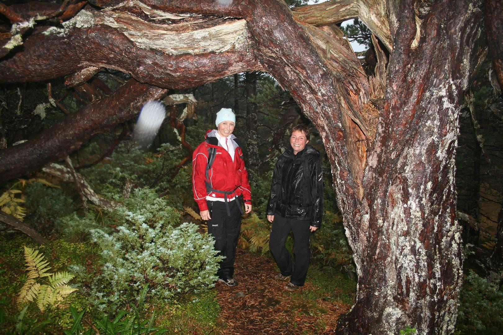 Jeg og Iris under en flott tre-kreasjon som stien går innunder - på veg mellom Eikefjordstølen og Hovlandstølen