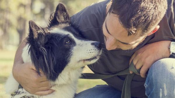 No solo es el mejor amigo del hombre, sino también que lo entiende (Shutterstock)