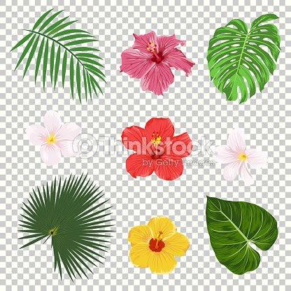 Vectores Tropicales Hojas Y Flores Conjunto De Iconos Aislado Sobre