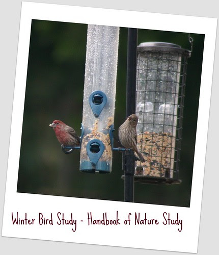Finches in the Feeders