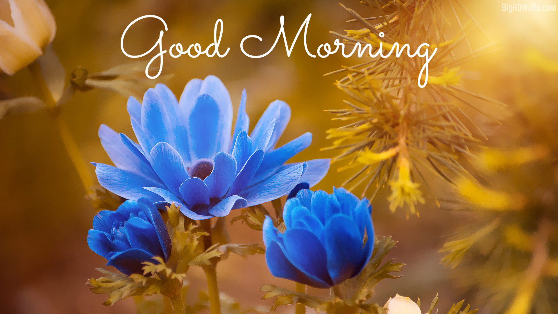 4k Good Morning Wallpapers High Quality Download Free