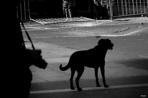 Entre la amistad del perro y la cámara by Alejandro Bonilla