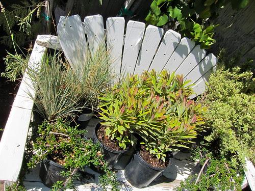 Lots of new Euphorbias in!