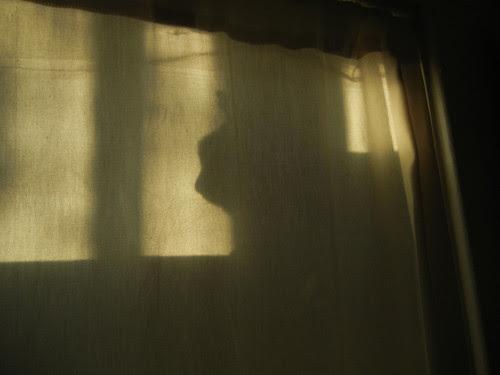 DSCN7372 _ Cat's Shadow