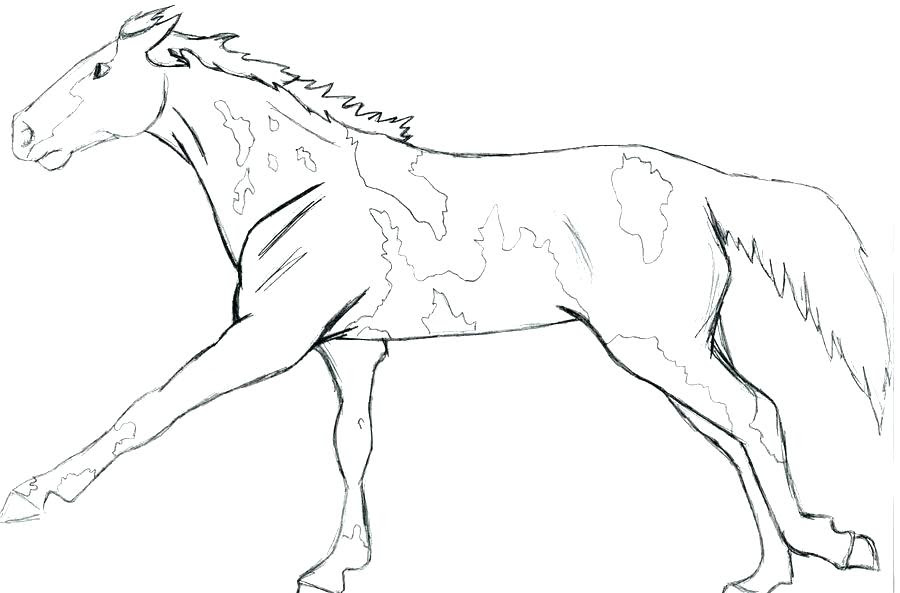Wolf Coloring Pages Realistic at GetDrawings   Free download