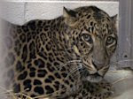 Exotic animals returned to Ohio woman