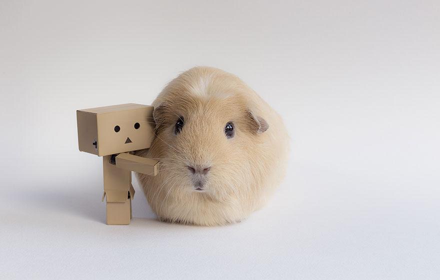guinea-pig-booboo-lieveheersbeestje-6