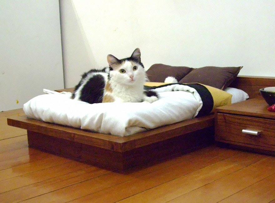 moveis-para-gatos-4