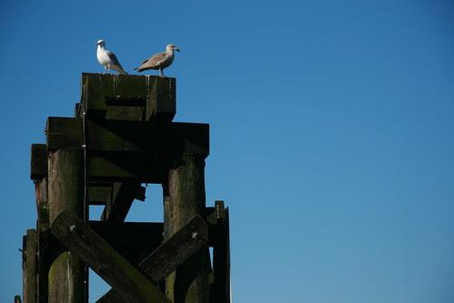 Seagulls at Granville Island