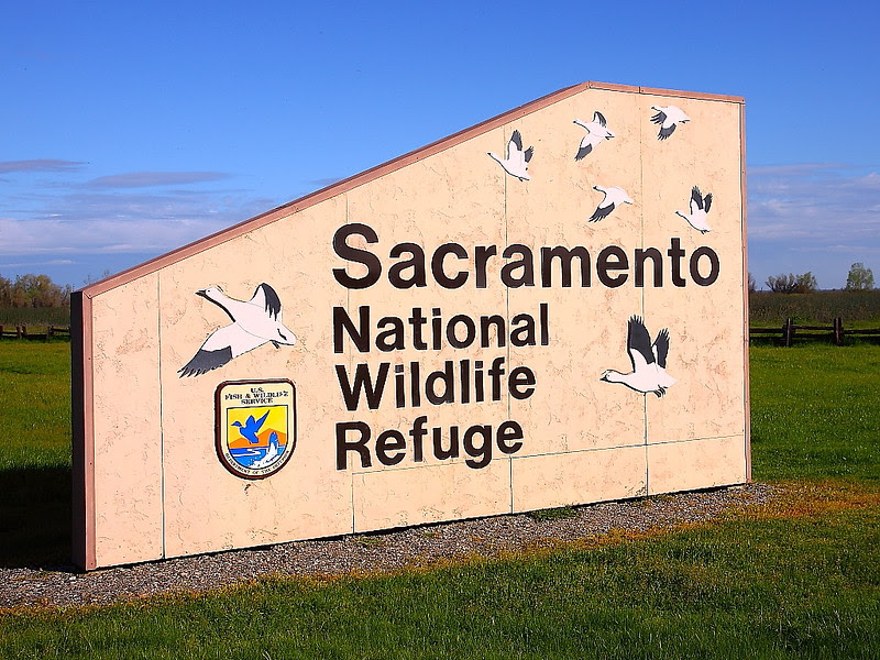 IMG_0829 Sacramento National Wildlife Refuge