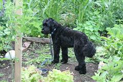 skippy in the garden 1