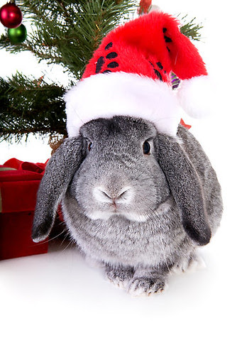 Dec 4 - christmas spirit