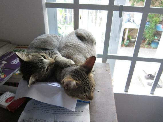mèo nhà... đã cũ rồi... vì 2 đứa này đã bị miêu tặc bắt đi mất :(