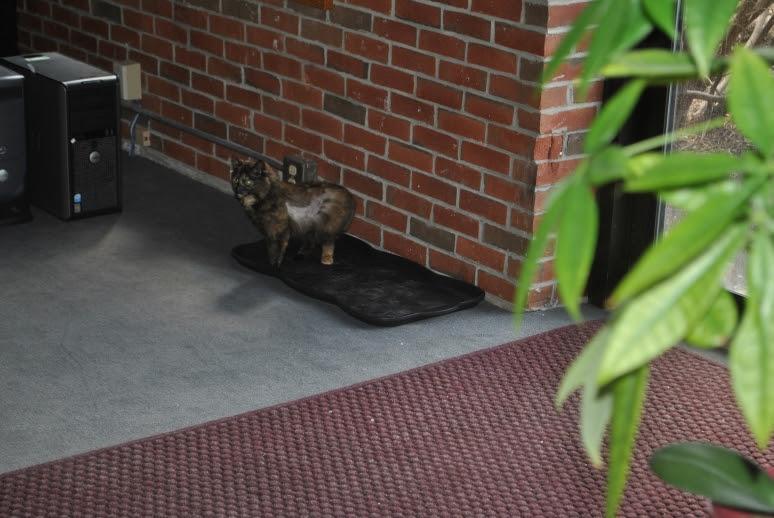 small tortie cat on boot matt