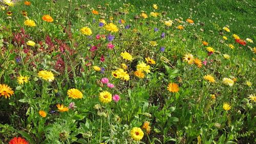 Kukat elokuussa by Anna Amnell