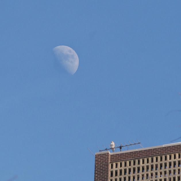 Ed Gaillard: recent &emdash; Bird and Moon
