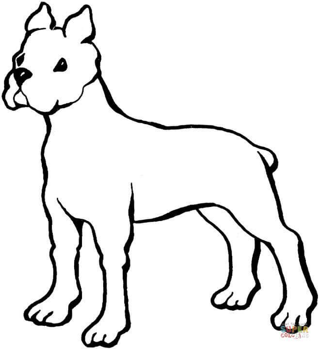 15 unique ausmalbilder hunde husky