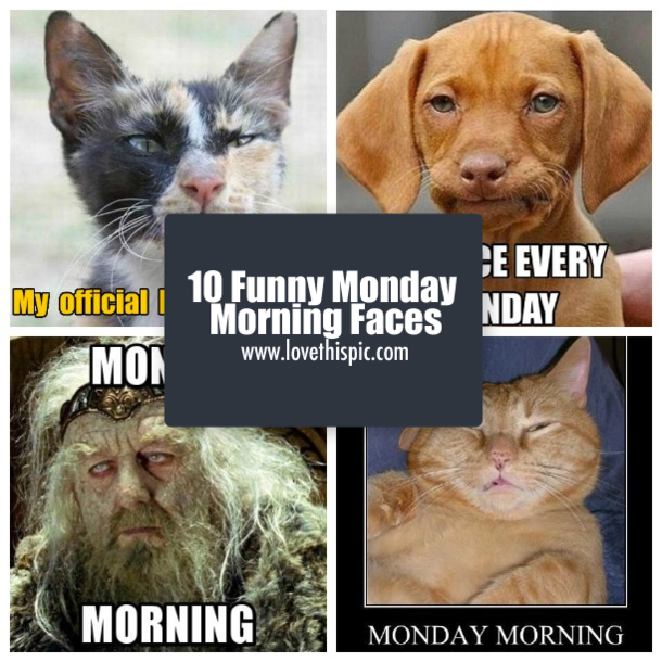 10 Funny Monday Morning Faces