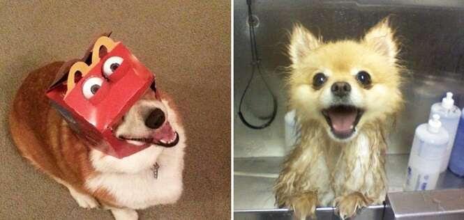 Cães que estão tendo um dia muito melhor que o seu