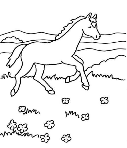 fohlen ausmalbilder pferde dressur  ausmalbild pferd mit