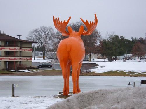 Moose Ass!