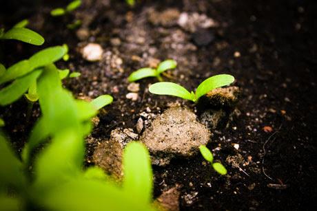 Our little Plants