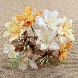 http://zielonekoty.pl/pl/p/Kwiatki%2C-W.O.C.-lilie-mix-brazowych-%2C-5-szt.-/1863