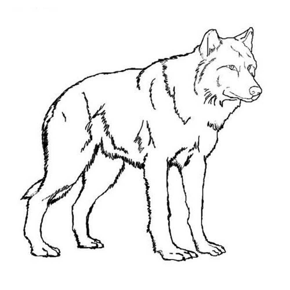 Wolf Pups Drawing at GetDrawings | Free download
