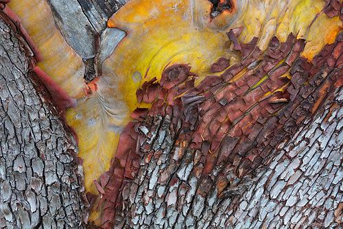 Patterns in Madrona Bark, San Juan Island, Washington