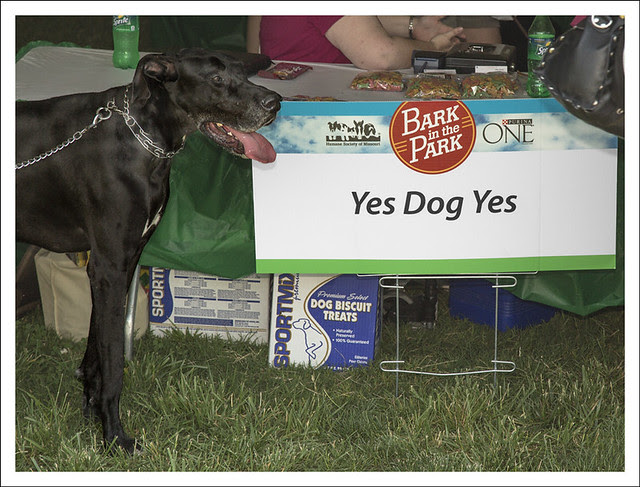Bark In The Park 2