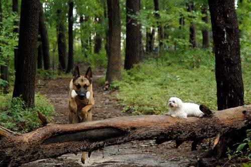Retrieve Over Log