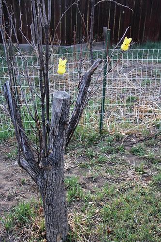 peep tree-1
