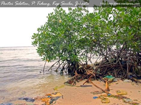 Pantai Selatan P. Tidung, Kep. Seribu, Jakarta