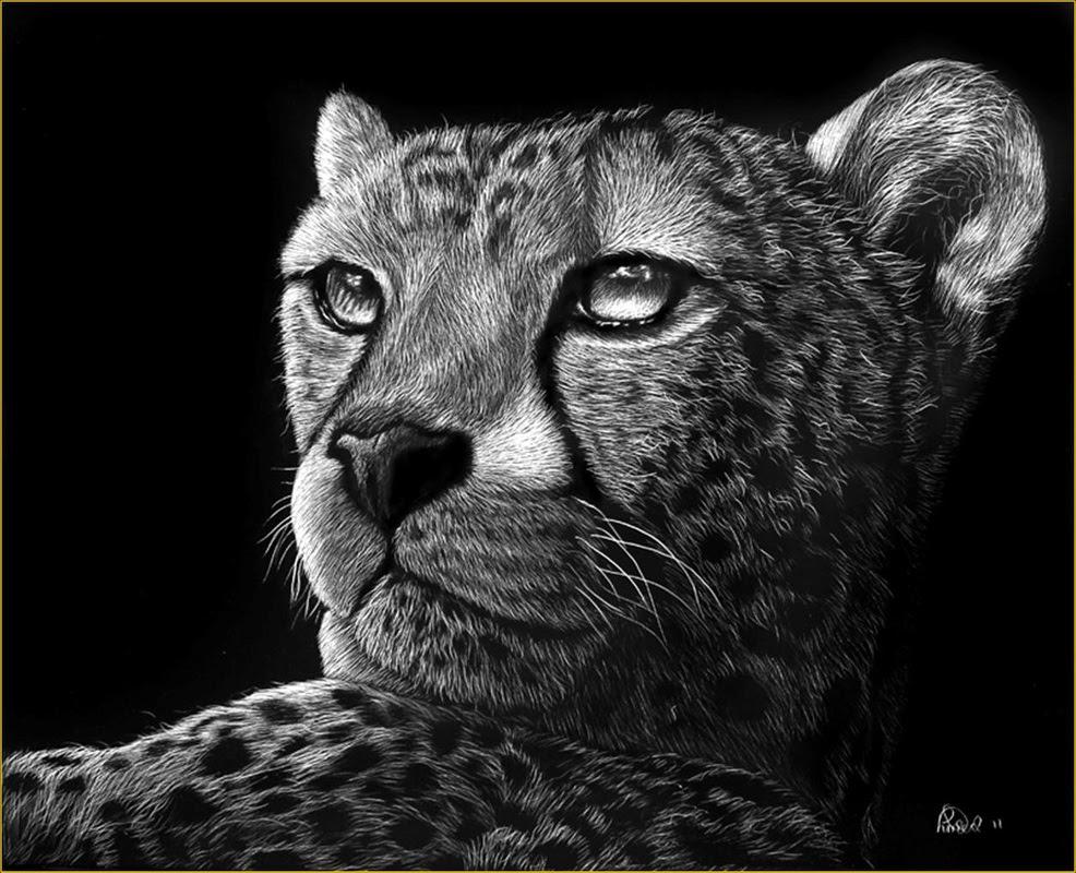 Scratch Art Animals - North Woods Art